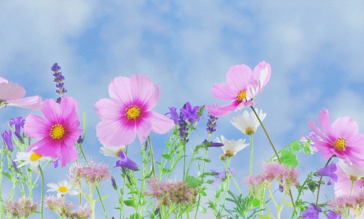 zelf tot bloei komen
