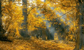 geniet met meer energie van de herfst