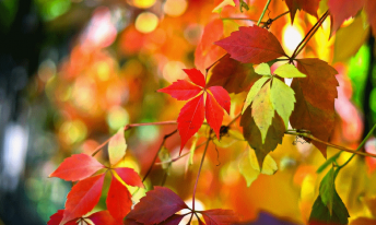 herfst-coach-wandeling