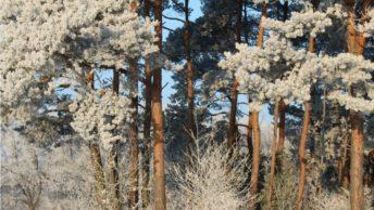 winter-coach-wandeling Miriam Dijst Coaching